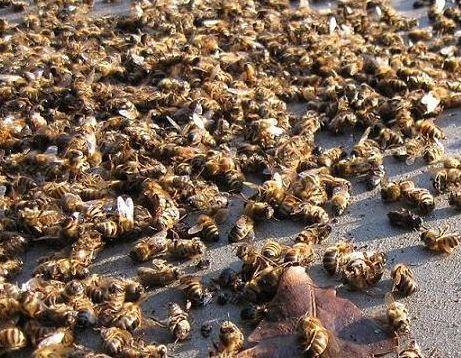 Source : Syndicat des apiculteurs d'Ille-et-Vilaine