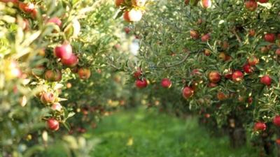 arboriculture-bio